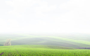 Green field intoducing the possibility to built a solar pv plant